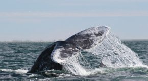 Five Whale Questions with WWF's Leigh Henry