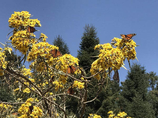Monarch butterfly migration tour