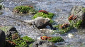 Traveler Story: A Classic Galapagos Adventure