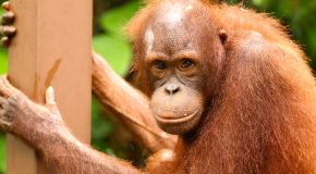 Wildlife Photos: Borneo's Up-Close Encounters