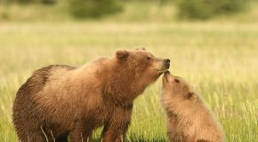 Wildlife Photo of the Week: A Special Moment