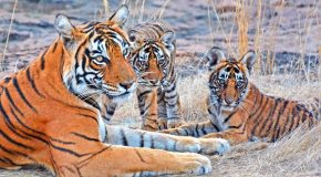 Traveler Story – India's Tigers & Wildlife: A Photo Safari