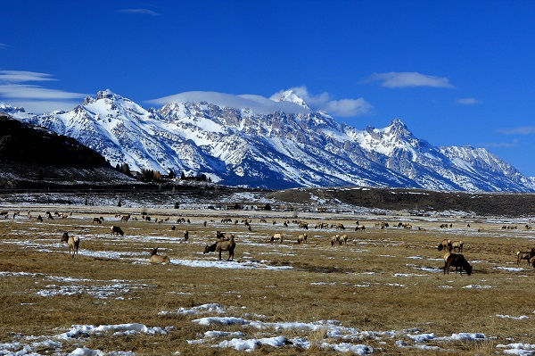 The Grand Tetons captured from The National Elk Refuge outside of Jackson, Wyoming.