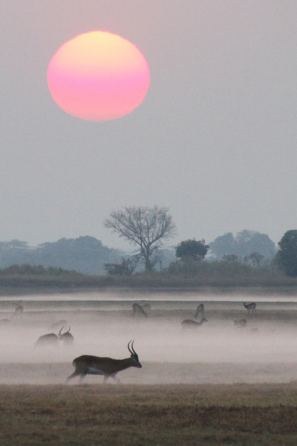 Sunrise over Busanga Plains Zambia