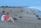 Traveler Edition: Tips for Protecting Sea Turtles & Their Nesting Sites