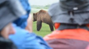 A Great Alaskan Grizzly Photo Adventure