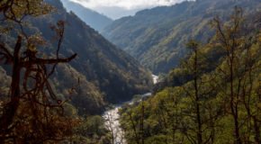 Green Future for Bhutan's Forests