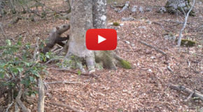 Video: One Tree's Wildlife Visitors in One Year