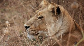 An Exceptional Safari in Botswana