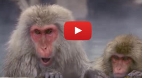 Video: A Post-Holiday, Hot-Springs Retreat with Japan's Snow Monkeys