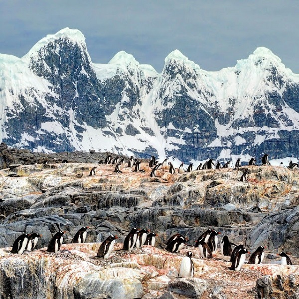 Penguin colony in Antarctica