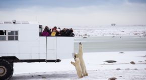Traveler Story: Close Encounters with Polar Bears