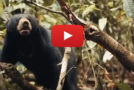 """Videos: The Sun Bear, """"He Who Likes to Sit High"""""""