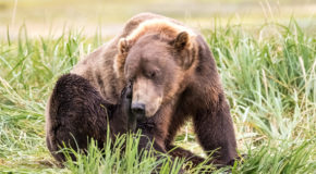 Wildlife Photo of the Week: Bear Itch
