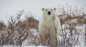 Wildlife Photo of the Week: White Watcher