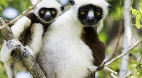 Traveler Story: Madagascar Wildlife Encounters