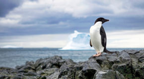 Fossil Finds and Penguin Packs: Final Frontiers Still Found on Earth