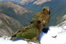 """New Zealand Builds Gyms for """"Problem"""" Birds"""