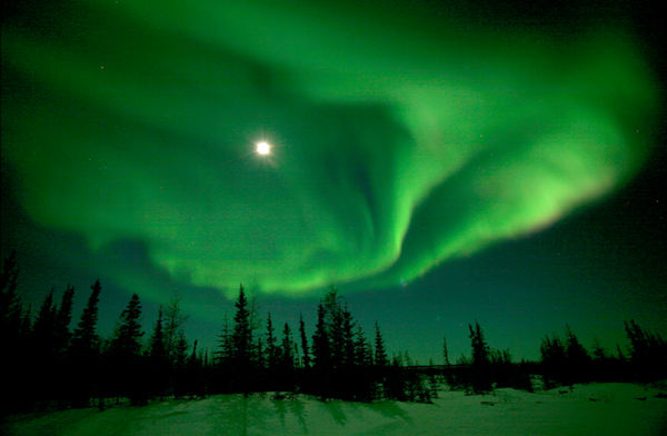 The moon and the green northern lights with pine trees