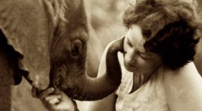 The Elephant Protector: Celebrating Daphne Sheldrick
