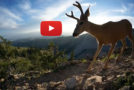 Video: A Newly Discovered Yellowstone Migration