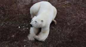 Awestruck: Breathtaking Encounters in Churchill