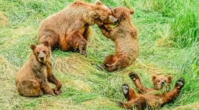 Traveler Story: Photos from an Alaskan Safari