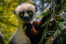 Fifteen Fascinating Facts About Lemurs