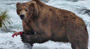 Traveler Story: Ultimate Alaska Wildlife Safari