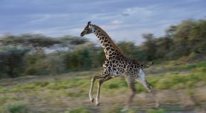 Traveler Story: Tanzania Migration Photo Safari