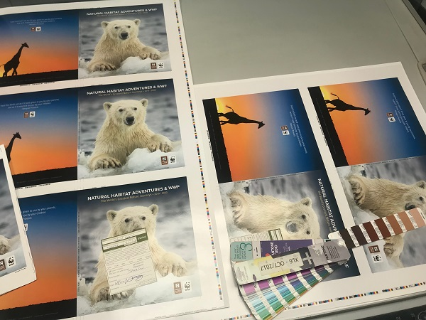 Checking the colors of the 2019 catalog covers