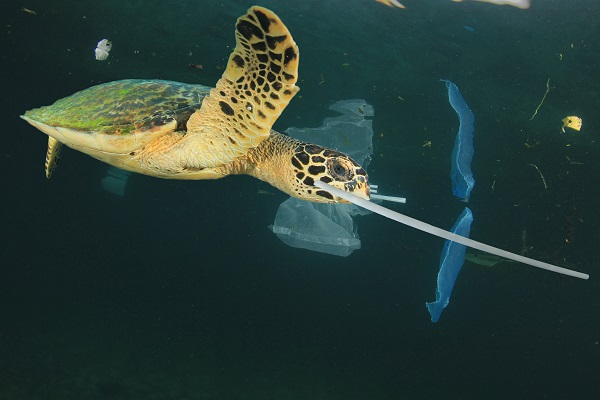 Sea turtle with plastic straw