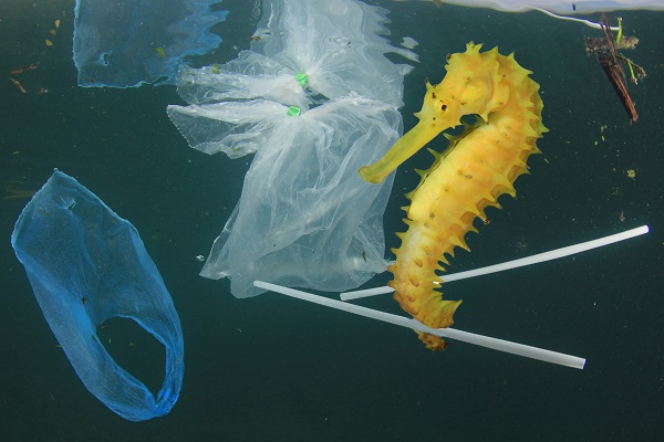 Sea horse with plastic straws