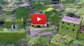 "Video: A Chinese Village Goes ""Green"" When Plants Take Over"