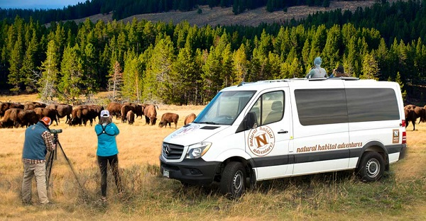 North American Safari Truck in Yellowstone