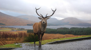 Scotland Doctors Are Now Officially Prescribing Nature