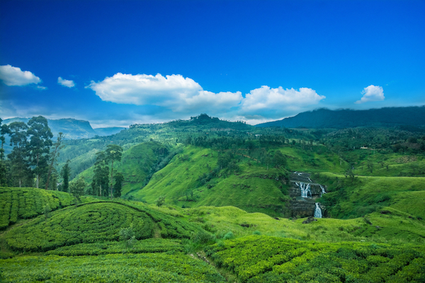 Tea estate in Sri Lanka.