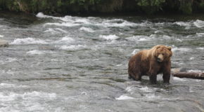 Realizations from a River in Alaska