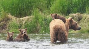 Traveler Story: Finding a Personal Connection With the Brown Bears of Brooks Falls