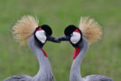 Wildlife Photo of the Week: Love Is in the Air