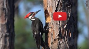 Video: Identifying Birds by Color Patterns