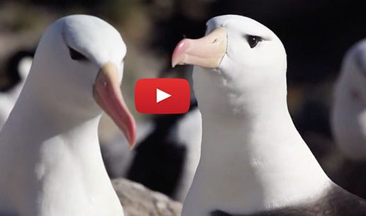 Videos: The Natural Worlds of Antarctica and the Falklands