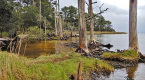 """New """"Ghost Forests"""" Are a Sign of Climate Change"""