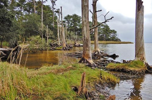 "New ""Ghost Forests"" Are a Sign of Climate Change"