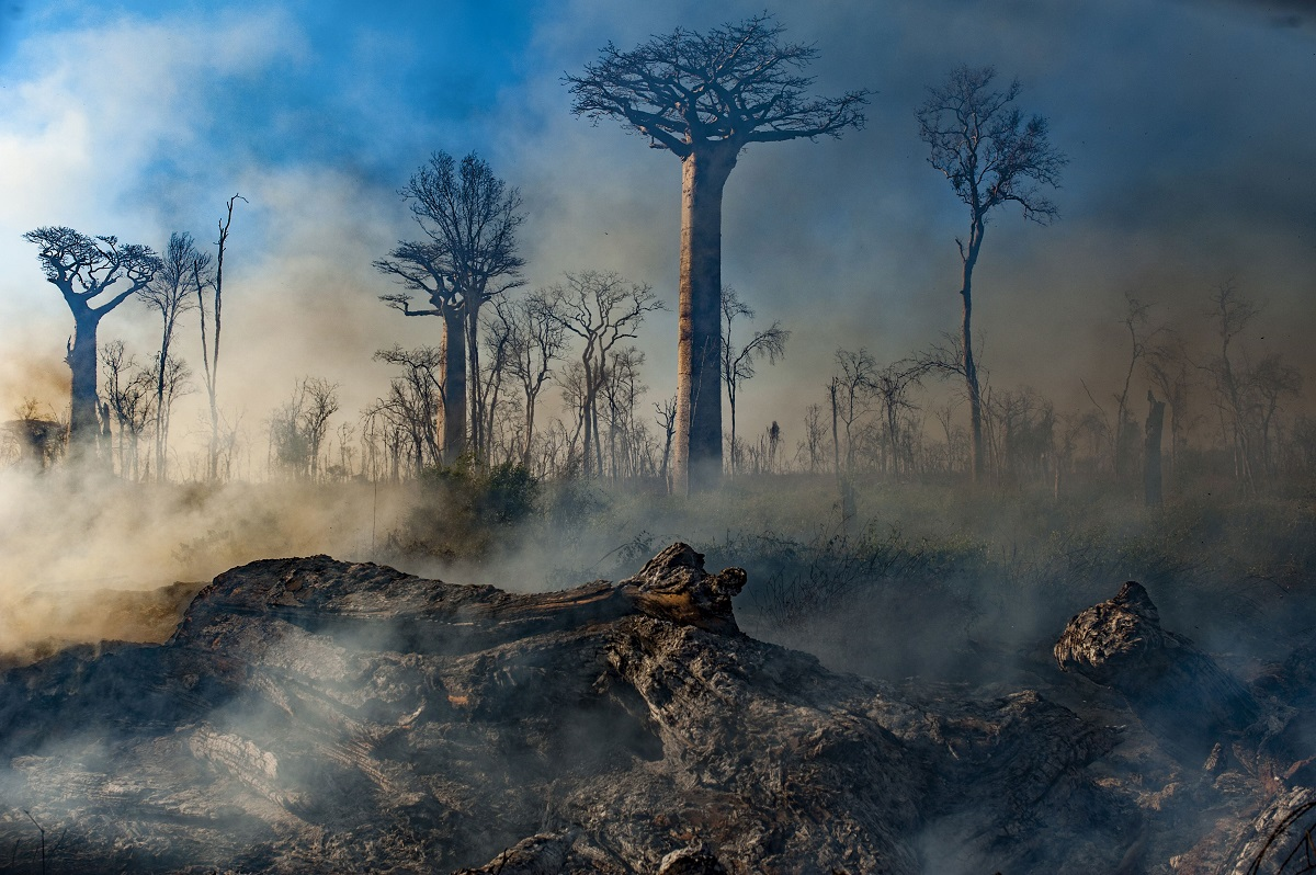 Fires smoldering after Slash and burn agriculture of dry baobab forest has caused a 97% reduction of this habitat across the island, dry forests, Madagascar