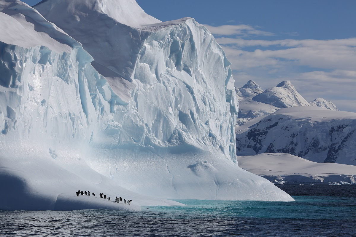 Gentoo penguins taking a rest from fishing on an iceberg passing by in the Gerlache Straight, Antarctic Peninsula.
