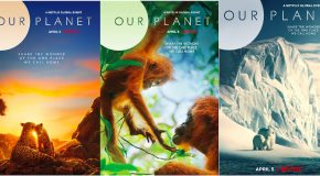 The <em>Our Planet</em> Species You Can See with Nat Hab & WWF