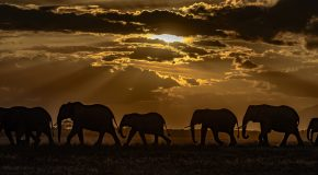 Wildlife Photo of the Week: Amboseli Nightfall