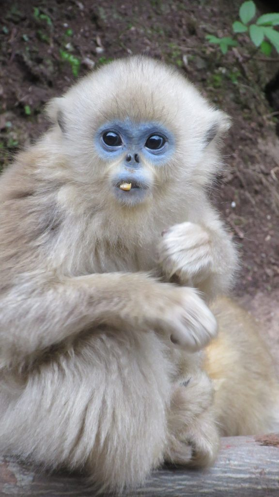 Monkey in China
