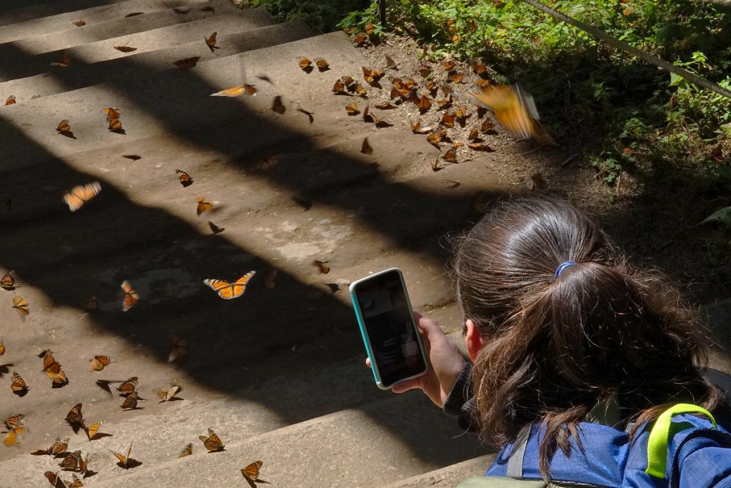 Teacher photographing a butterfly